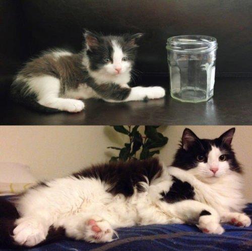 """Прелестные фотографии кошек """"тогда и сейчас"""", которые растопят ваше сердце (31 фото)"""