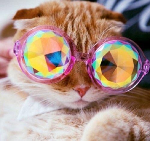 Кошки в очках, которые вызовут вашу улыбку (10 фото)