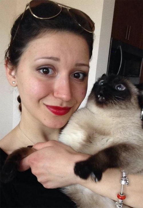 Кошки, которые не любят фотографироваться (31 фото)