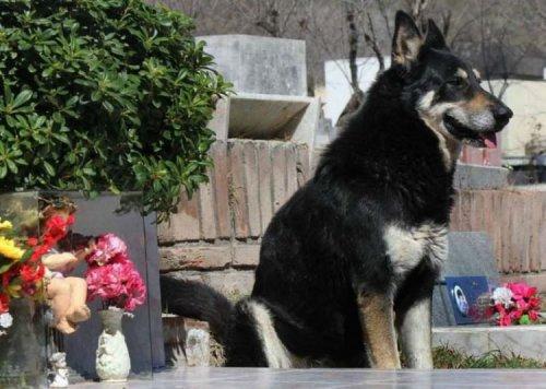 Верный пес из Аргентины 10 лет ждет своего хозяина на его могиле (3 фото + видео)