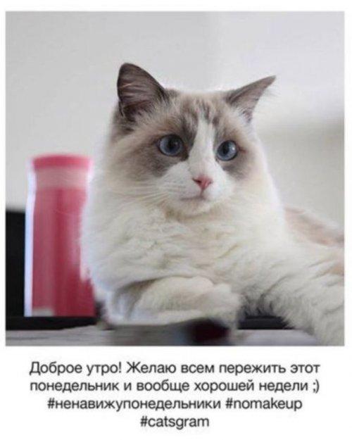 Если бы у кошек был аккаунт в Instagram (7 фото)