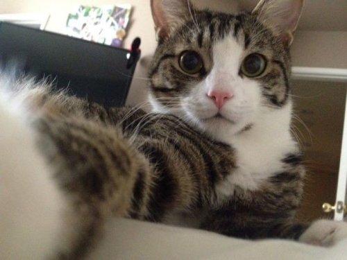 Кошки-хакерши, которые ввели неправильный пароль и спалились (14 фото)