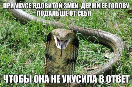 Свежие анекдоты посмеяться (15 шт)