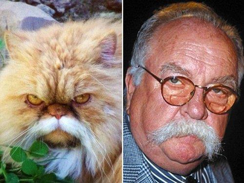 Кошки, похожие на известных персонажей и знаменитостей (17 фото)
