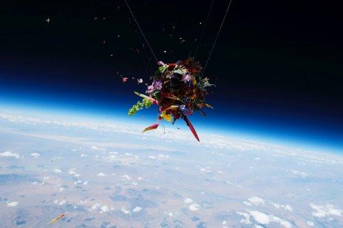 Японский художник запустил цветы в космос (14 фото)
