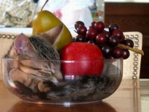 Кошки, которым приглянулись вазы для фруктов (10 фото)