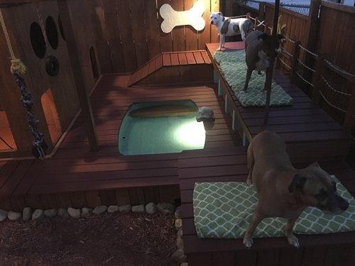 Владелец четырёх собак превратил задний двор в собачью площадку (8 фото)