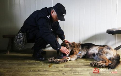 Китайский полицейский построил дом престарелых для старых полицейских собак (5 фото + видео)