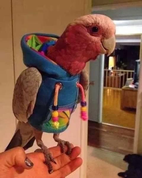 Животные, которые тоже любят модно одеваться (20 фото)