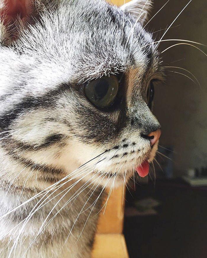 что фото грустной кошки учетом
