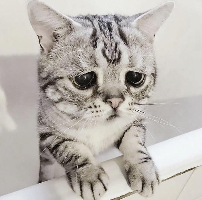 картинка с грустными глазами котенка мельбурне медали