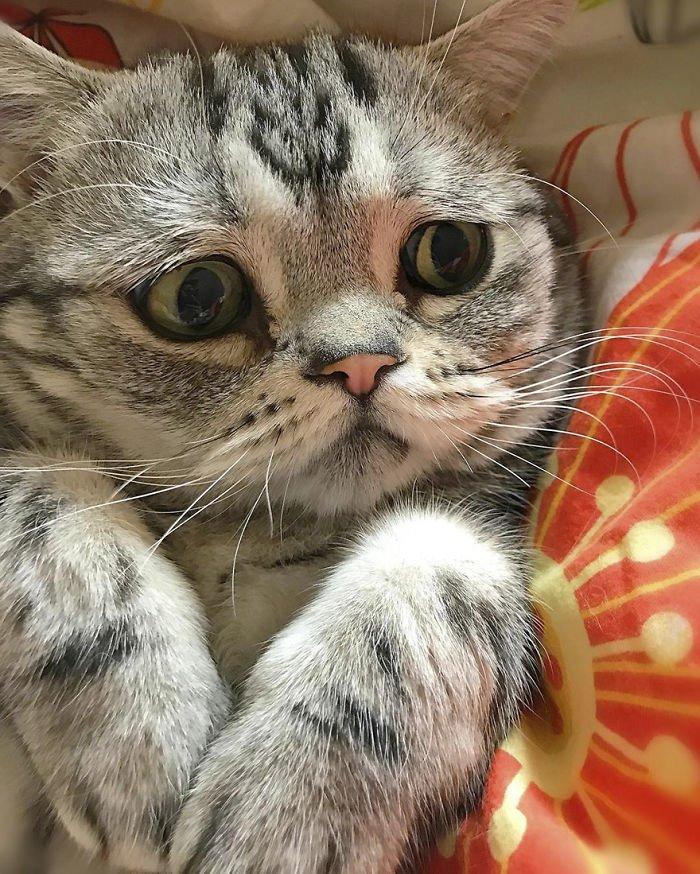 Картинки надписями, картинки грустный котик