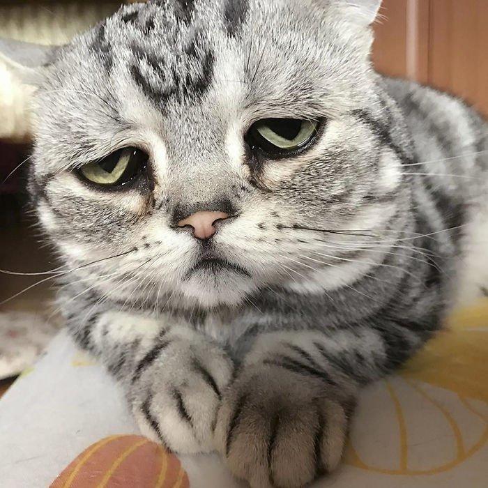 фото грустной кошки коса
