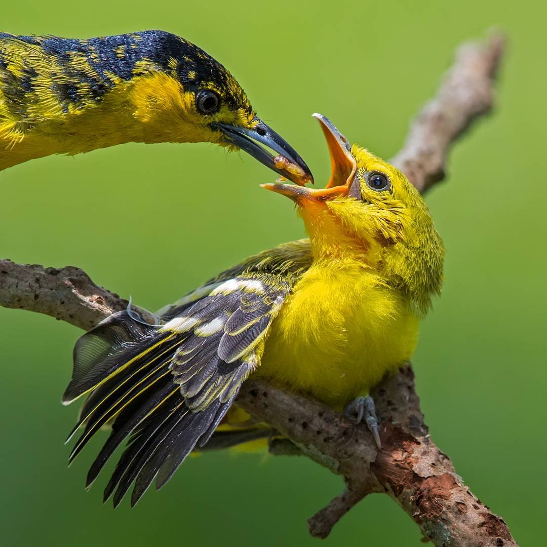 Картинки красочных птиц устройство предназначено