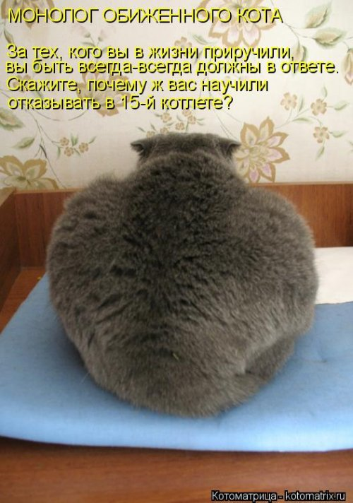 Свежая котоматрица на Бугаге (27 фото)