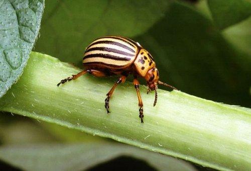 Топ-25: Самые надоедливые насекомые на Земле