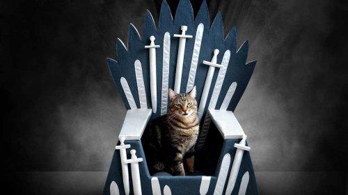 """Кровать """"Железный трон"""", перед которой не устоит ни одна кошка (6 фото)"""