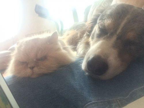 Кошки и собаки, дружбе которых можно только позавидовать (24 фото)