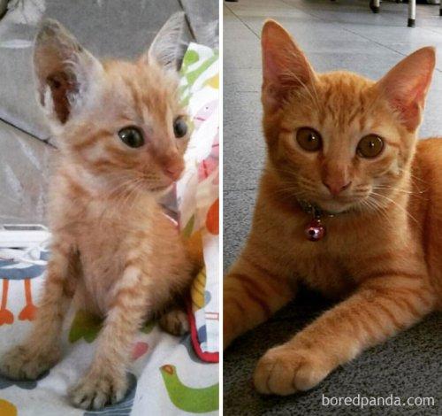 """Прелестные фотографии кошек """"тогда и сейчас"""", которые растопят ваше сердце (29 фото)"""