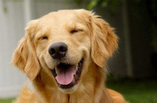 Улыбчивые собаки, которые подарят вам хорошее настроение (22 фото)