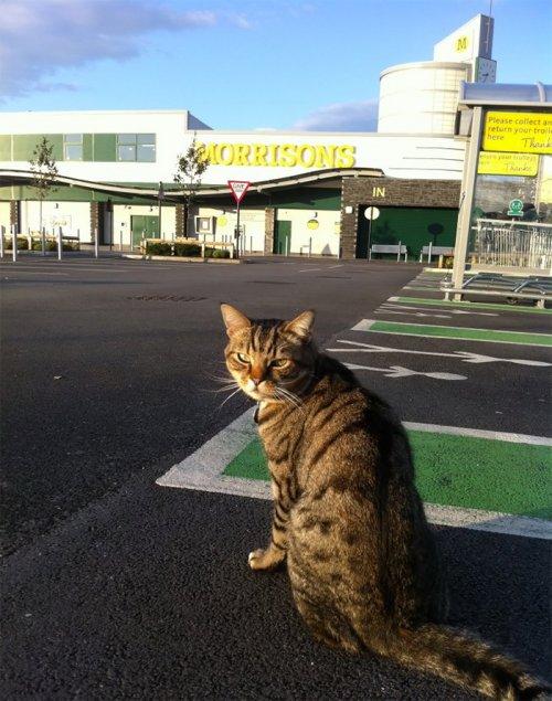 Покупатели собрали деньги на бронзовую статую в память о всеобщем любимце, магазинном коте Бруте (10 фото)