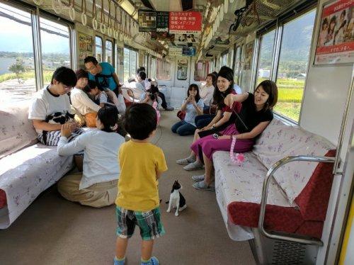 """В Японии можно совершить поездку на """"кошачьем"""" поезде (3 фото + видео)"""