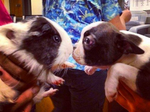 Очаровательные двойники из мира животных (13 фото)