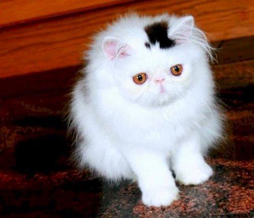 Кошки с необычным окрасом, которые подарят вам улыбку (30 фото)