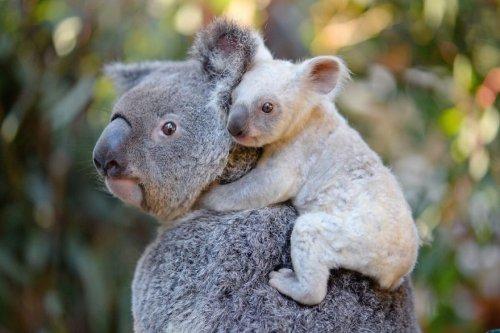 Потрясающие фотографии дикой природы Роберта Ирвина (29 фото)