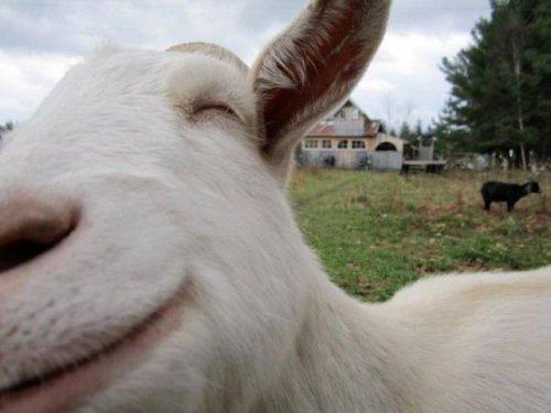 Забавные животные, которые вызовут улыбку (24 фото)