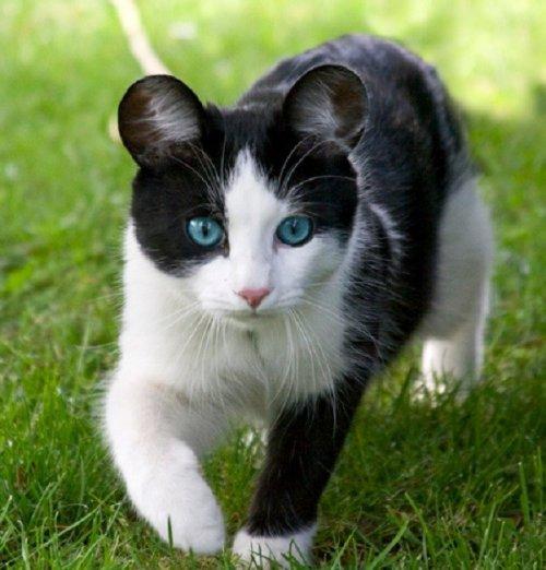 Смешные кошки с необычными ушами (10 фото)