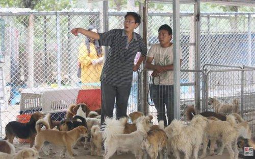 Китайский «Защитник собак» за последние 8 лет спас более 700 бродячих псов (4 фото)