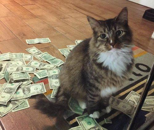 Хитрый кот-воришка отбирает у людей деньги, которые затем идут на благотворительность (9 фото)