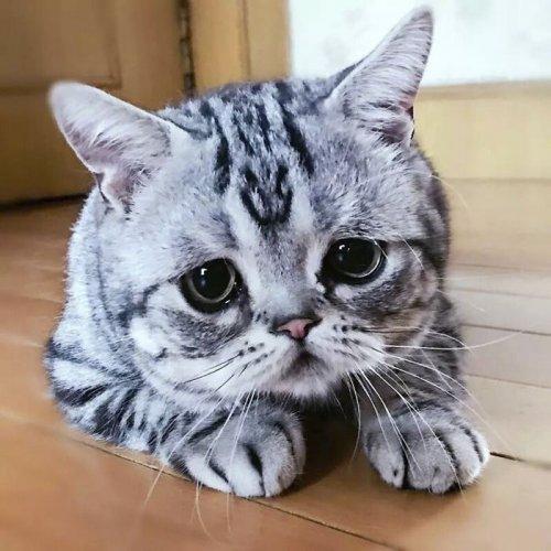 Луху: самая грустная кошка на свете, чьи фотографии разобьют ваше сердце (27 фото)