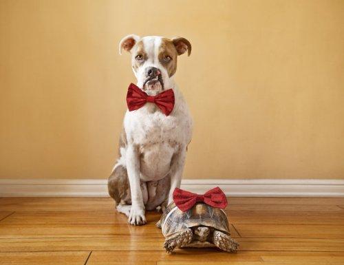 Неожиданная дружба между собакой и черепахой, которая растопит ваше сердце (12 фото)