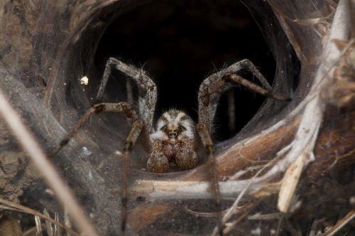ТОП-10: Самые отвратительные паукообразные в мире
