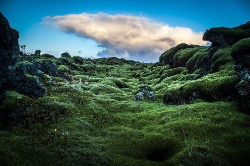 Покрытые мхом лавовые поля Исландии (10 фото)