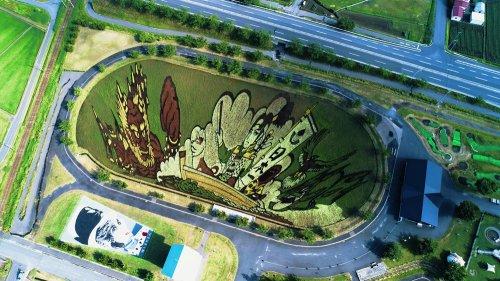 Красочные рисунки на рисовых полях японской деревни Инакадате (4 фото + видео)