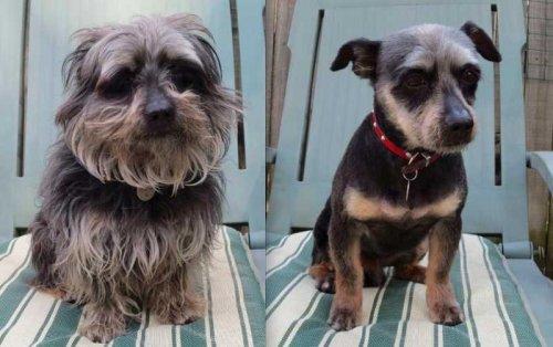 Забавные собаки до и после стрижки (15 фото)