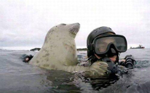 Забавные животные, которые поднимут вам настроение (27 фото)