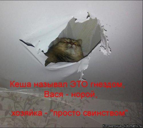 Свежая прикольная котоматрица (26 фото)
