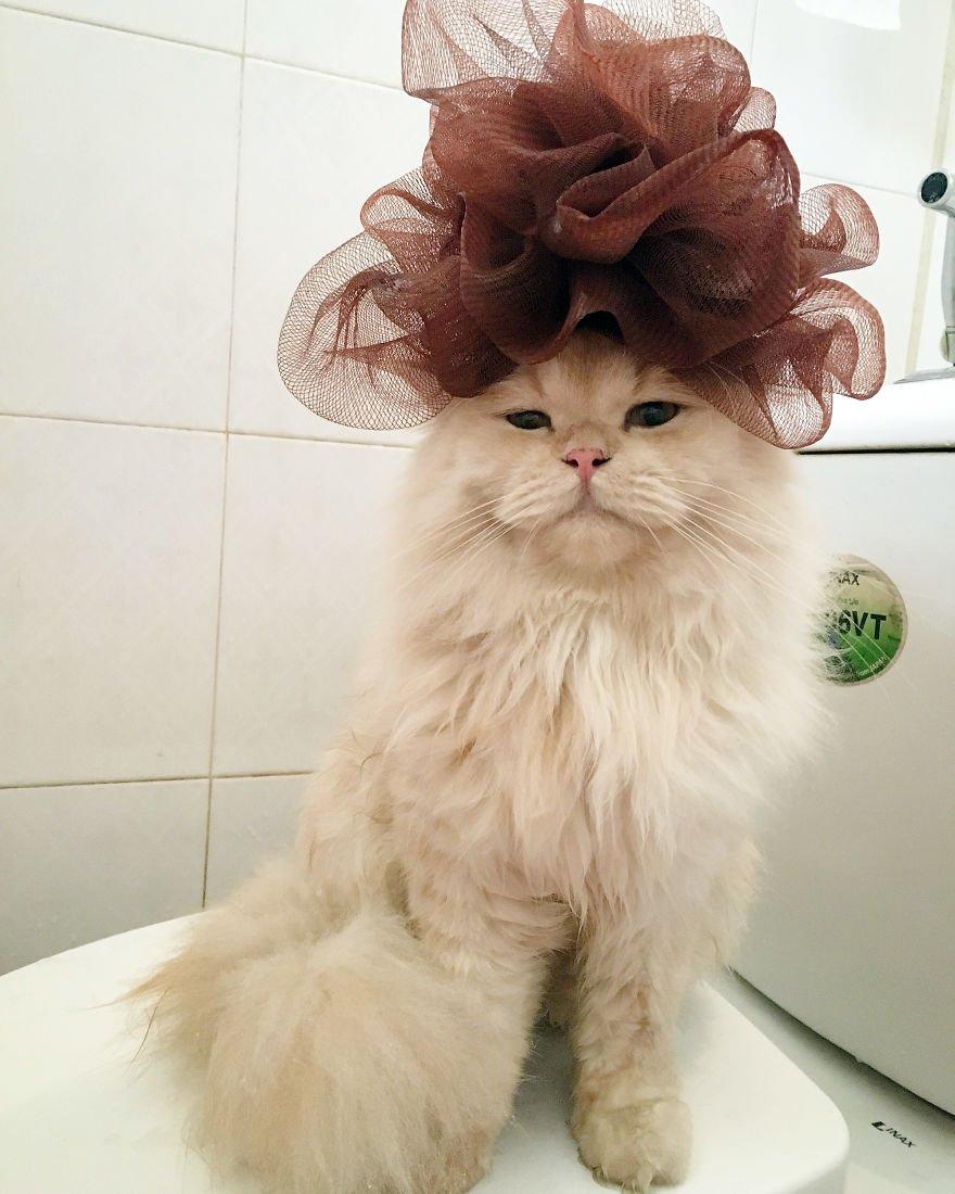 рисунок на голове кошки фото экстренный