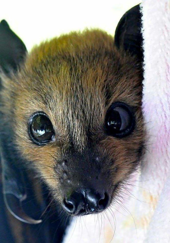 милые картинки с летучими мышами информация выращивании доступна