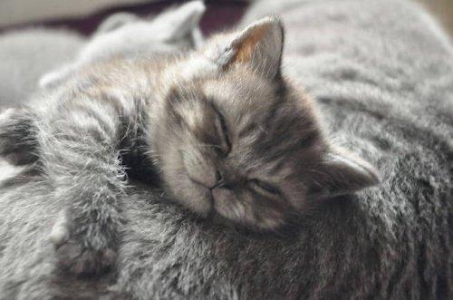 Очаровательные котейки, которые вызовут вашу улыбку (25 фото)