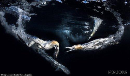 Победители конкурса подводной фотографии от журнала Scuba Diving (10 фото)