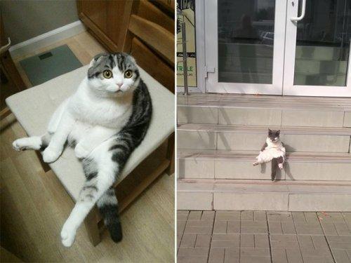 Смешные кошки, которые разучились сидеть по-кошачьи (17 фото)