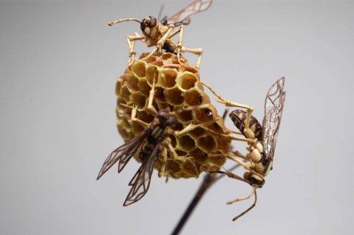 Невероятно реалистичные скульптуры насекомых из бамбука от Нориюки Саито (13 фото)