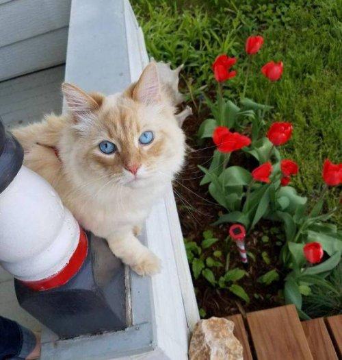Кот, который просто обязан быть диснеевской принцессой (6 фото)