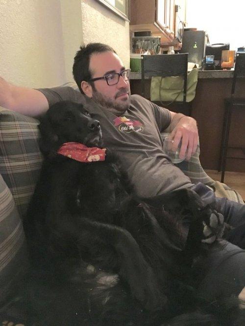 Забавные собаки, которые хотят быть похожими на людей (29 фото)