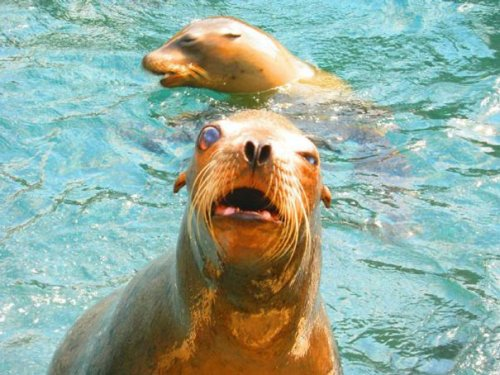 Смешные животные, которым не повезло с фотогеничностью (30 фото)
